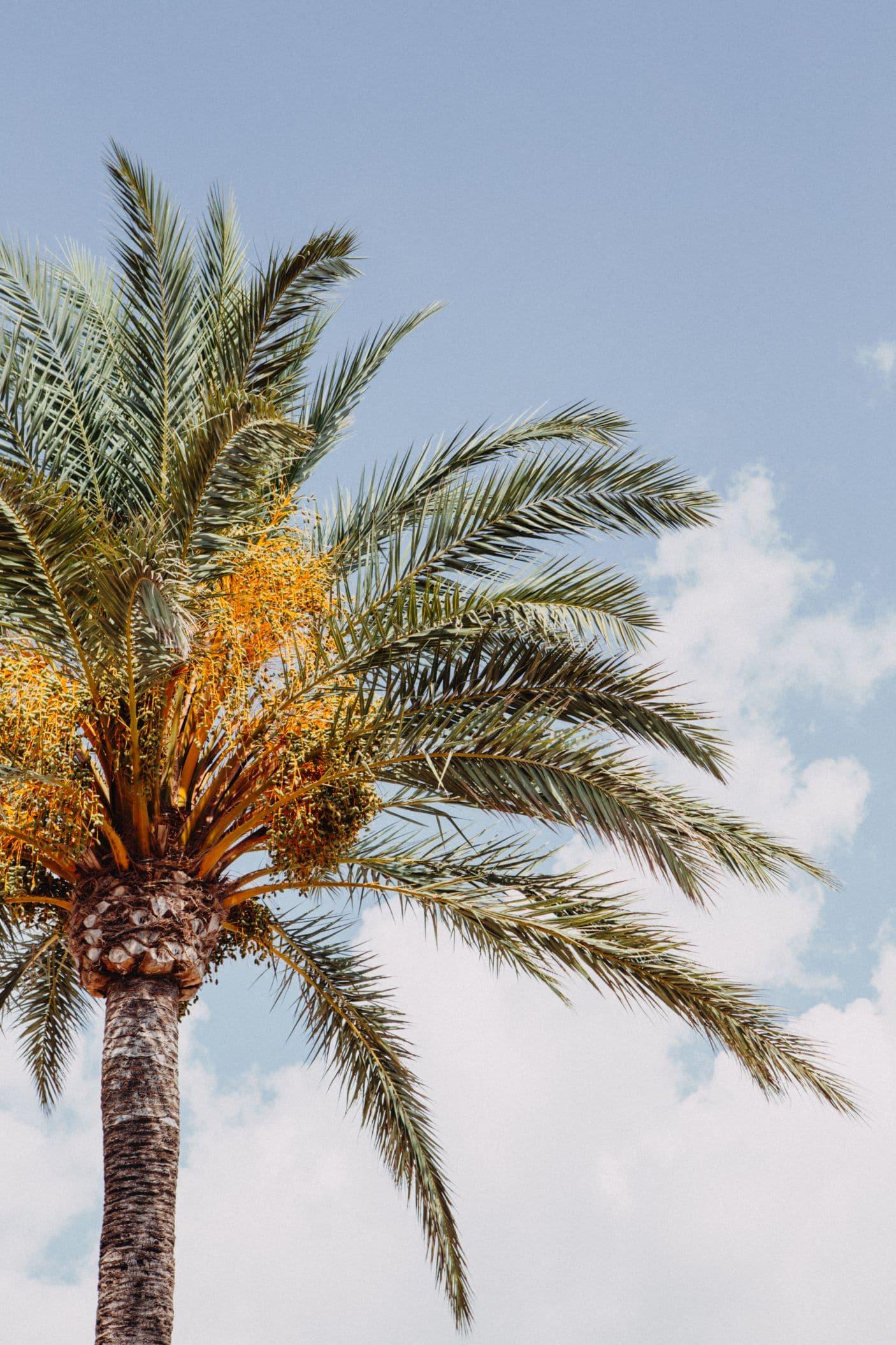 Million Memories_S&J_Hochzeitsfotograf_Mallorca_Spain_Wedding_Spanien Hochzeit_Balearen_Balearic islands_024